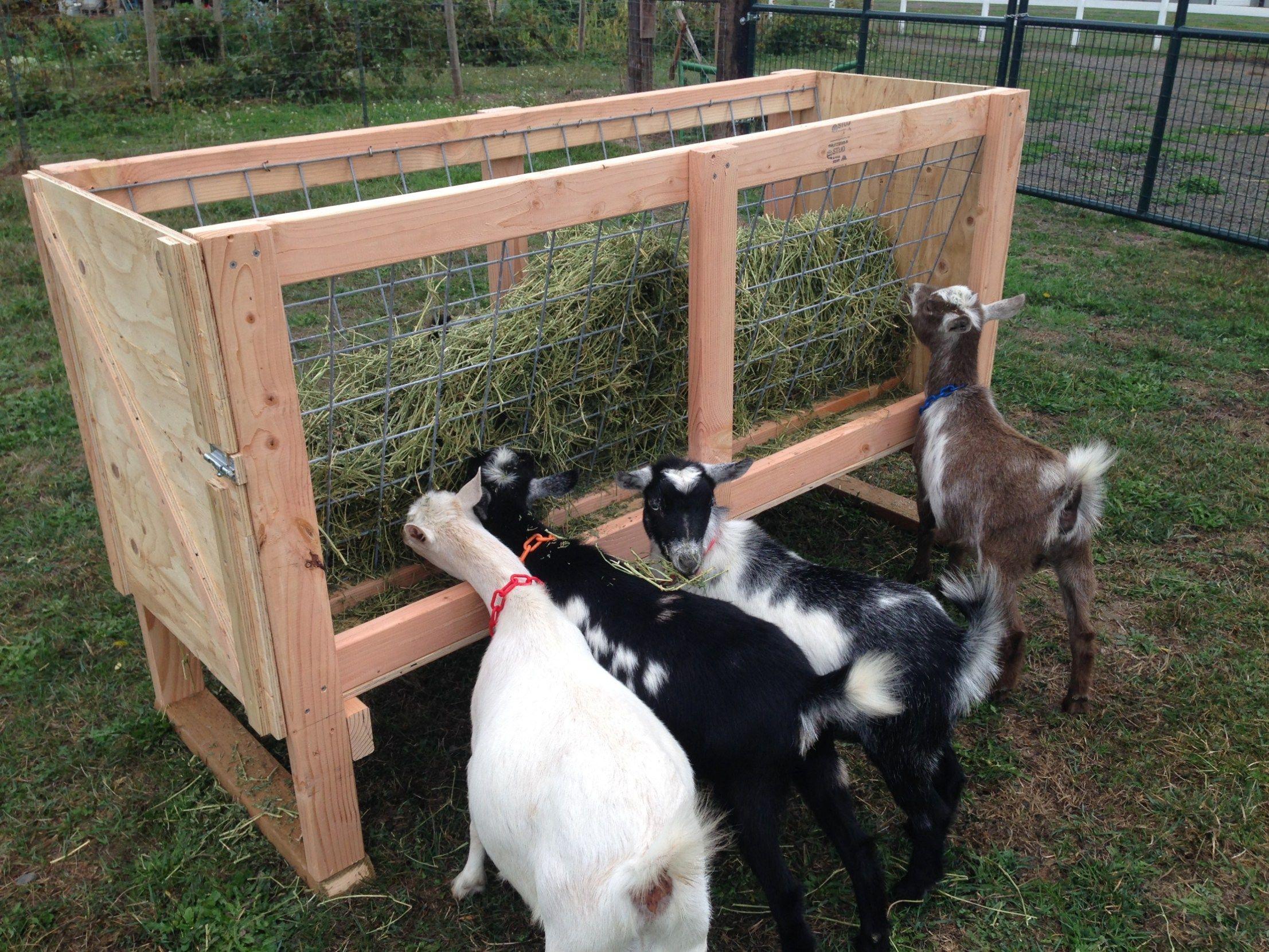 Homemade Goat Feeders For Sale Goat Feeder Goat Pen Goat Shelter