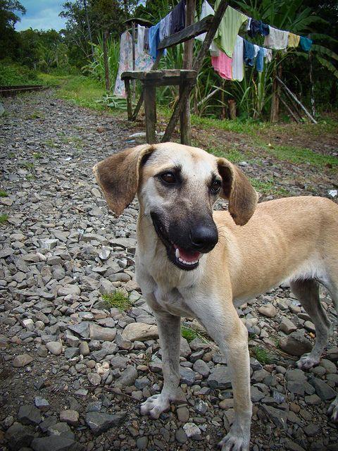 Dog - San Cipriano - Buenaventura - Valle del Cauca