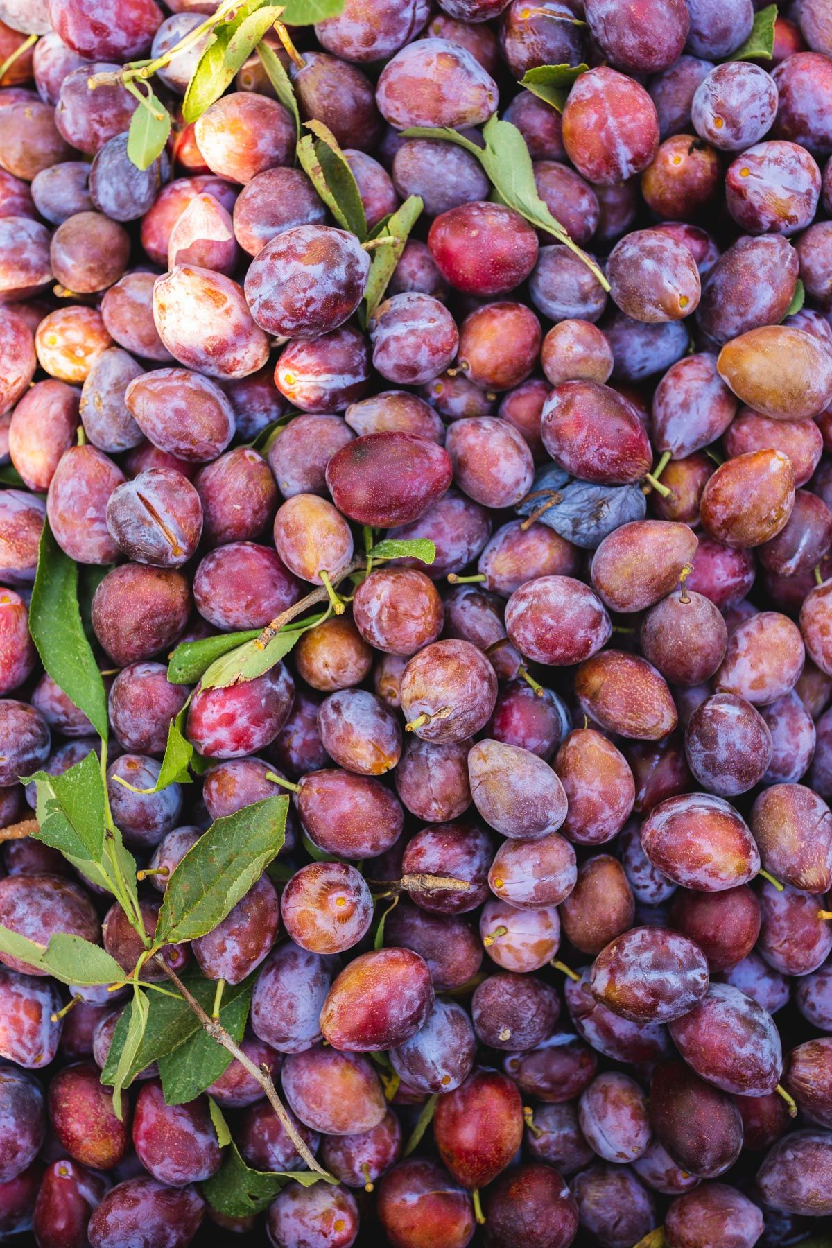 Why You Should Eat More California Prunes (& How to Get