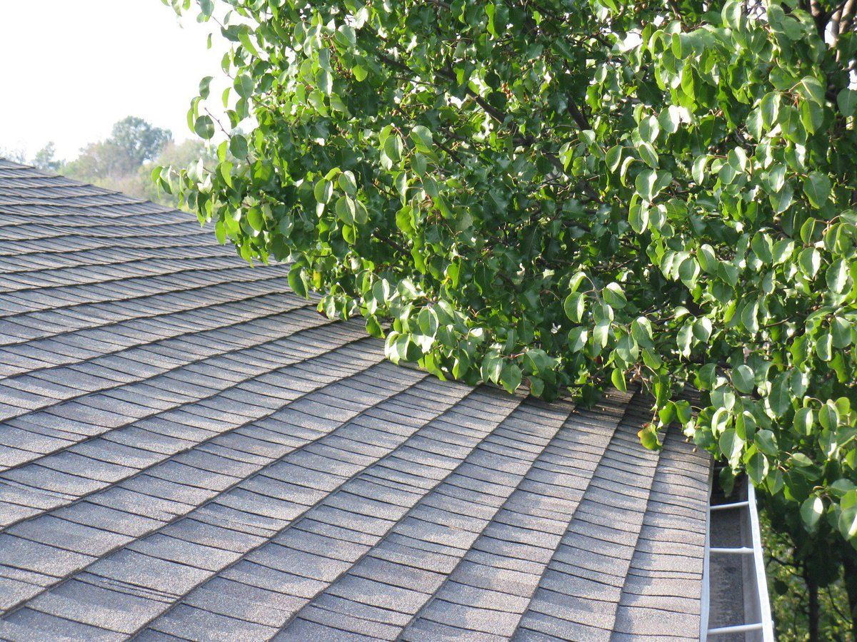 ROOFING TIP! Prune tree branches that may be hanging or touching your roof  as this can cause damage if they touch, or be a bridge for clim… | Roofing,  Tips, Canning