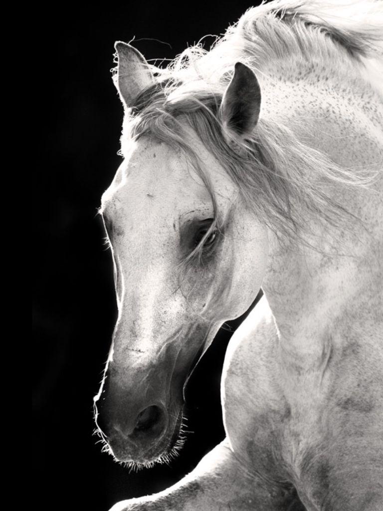 Fotovic blackuwhite pinterest horse photography horse and