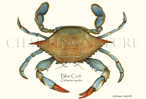 Crab Blue In 2020 Fish Print Crab Painting Vintage Fishing