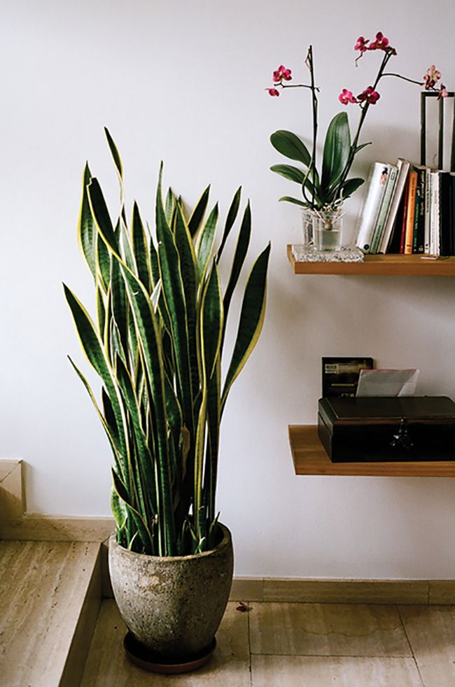Contemporary Indoor Plants how to decorate with plantskimberly duran | plants, decorating