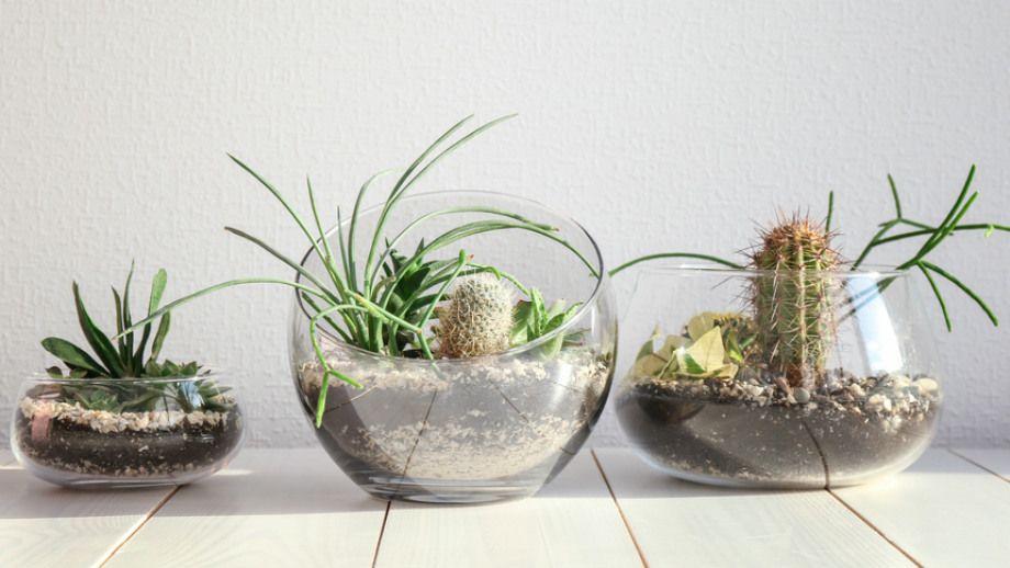 Miniogrodek W Szkle Kompozycje Decor Home Decor Terrarium
