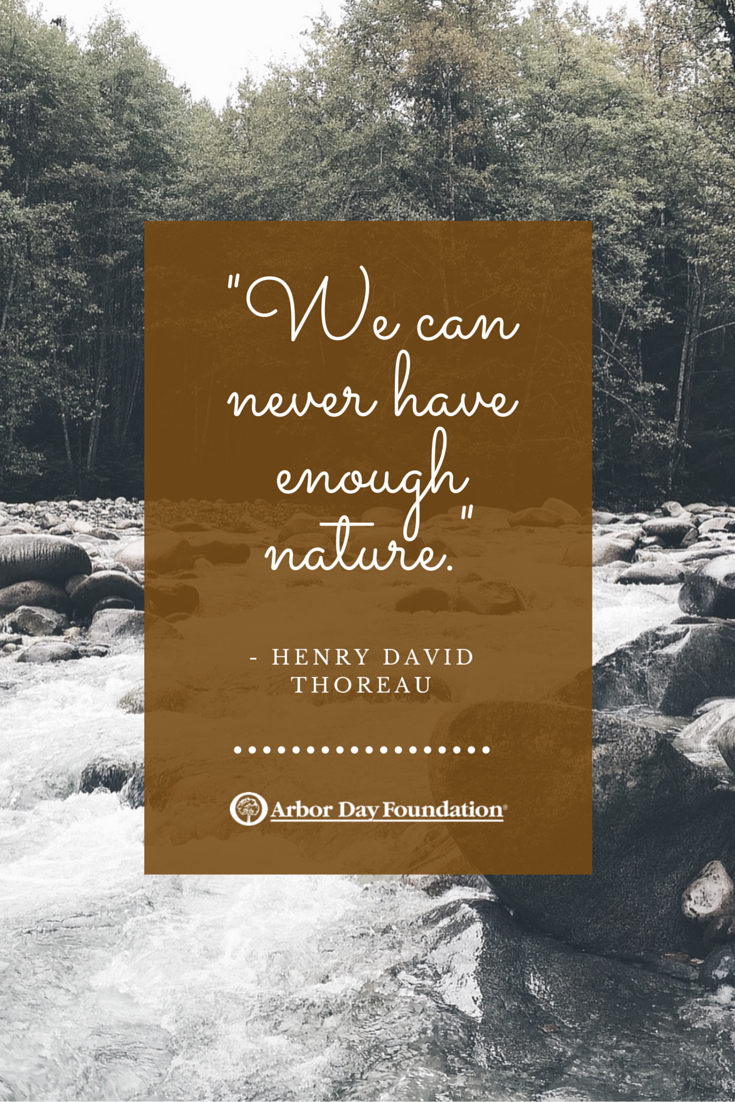 We Can Never Have Enough Nature Henry David Thoreau Nature Quotes Love Nature Quotes Forest Quotes