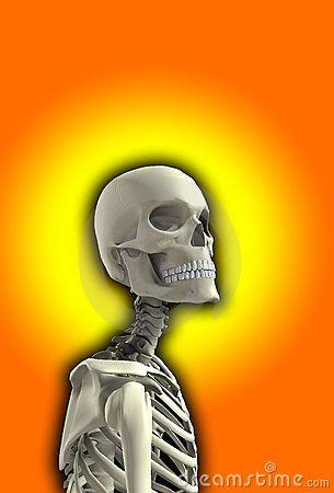 Close Up Skeleton by Chrisharvey, via Dreamstime