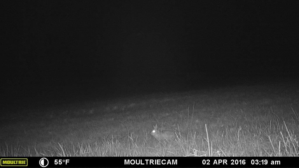 Moultrie M 888i Night Photos Trail Camera Game Cameras