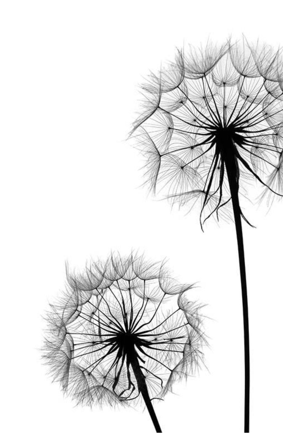 Pin by Nicky Slade on Framed print ideas White art