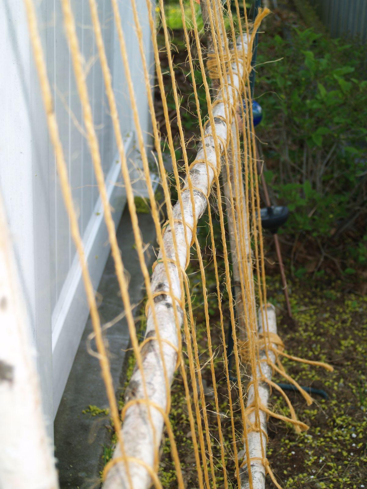 Diy. Simple string bean trellis | Garden beans and peas | Pinterest ...