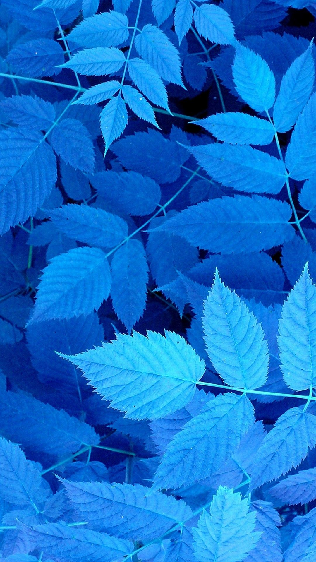 blue leaves iphone wallpaper