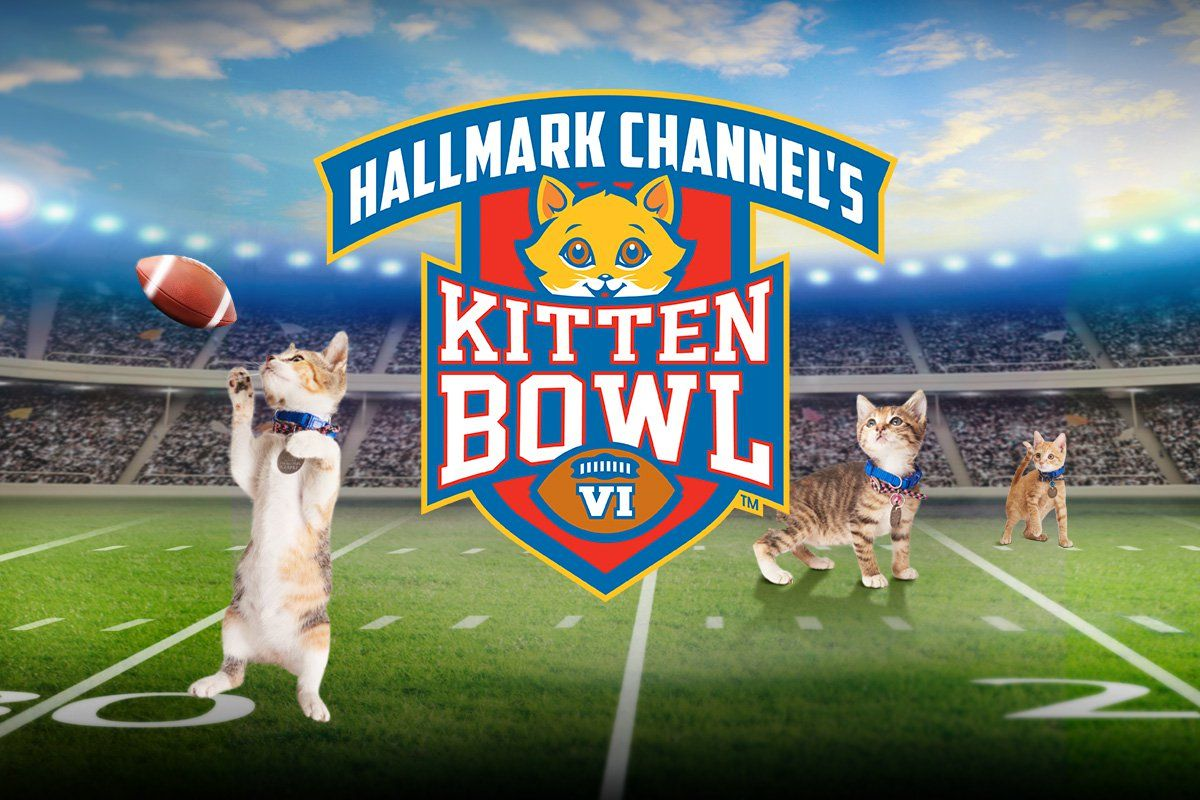 Kitten Bowl Party At Tri County Animal Shelter Animal League Kitten Bowls Animal League Animal Shelter