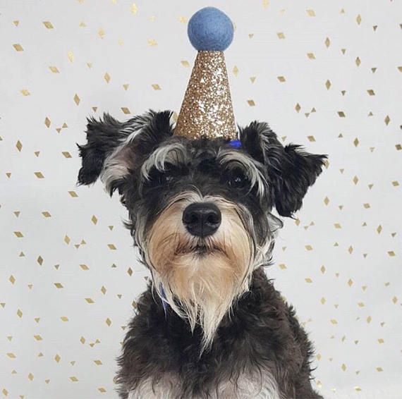 Dog Birthday Hat Small Bow Tie