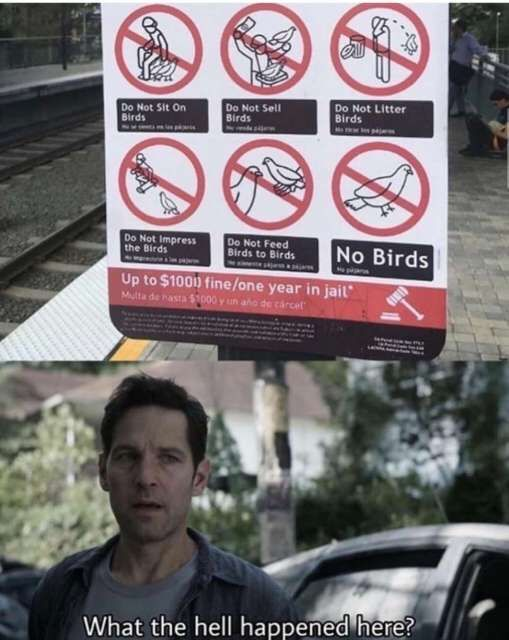 Poor birds