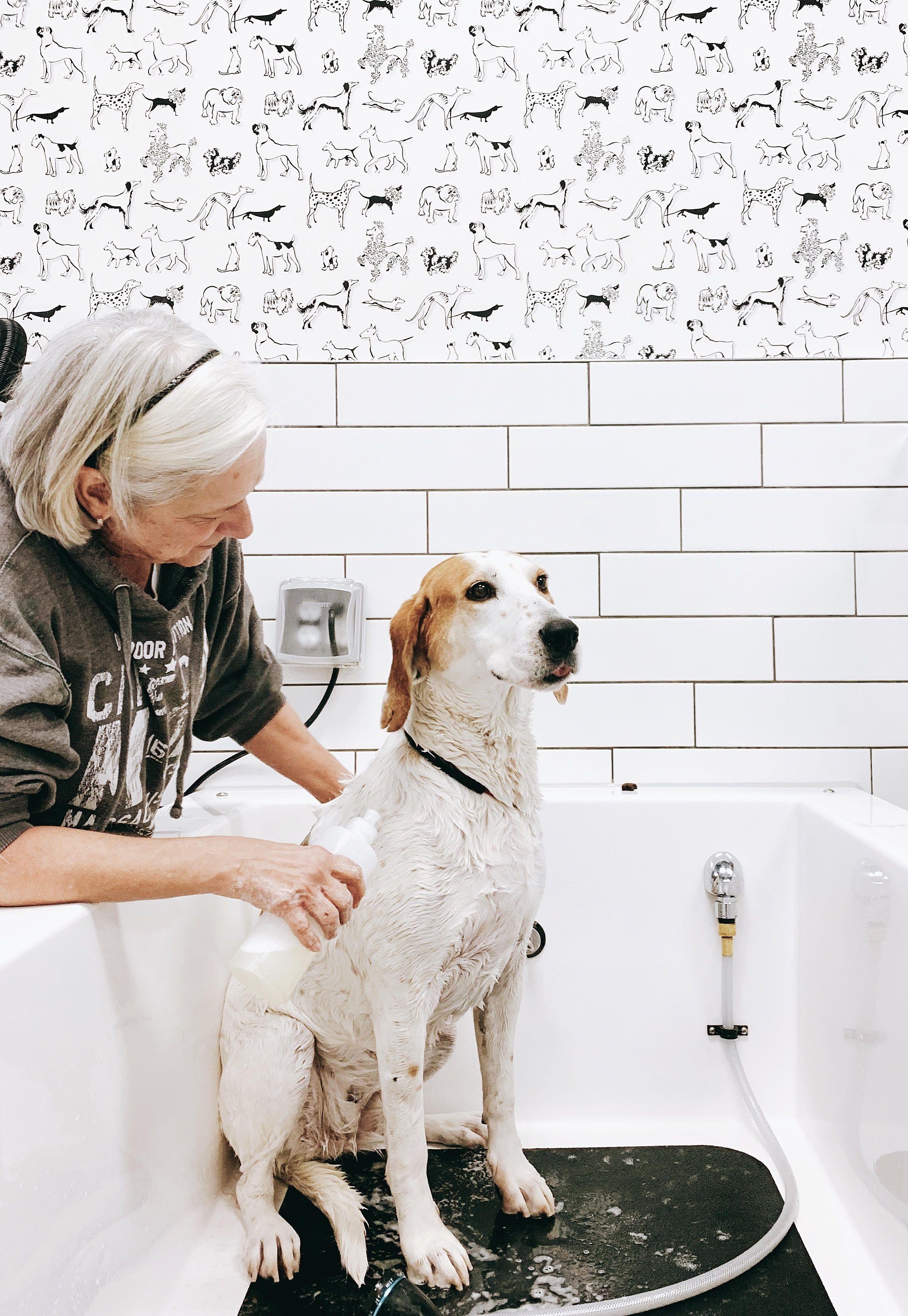 Self Service Dog Wash Dog Wash Service Dogs Dogs