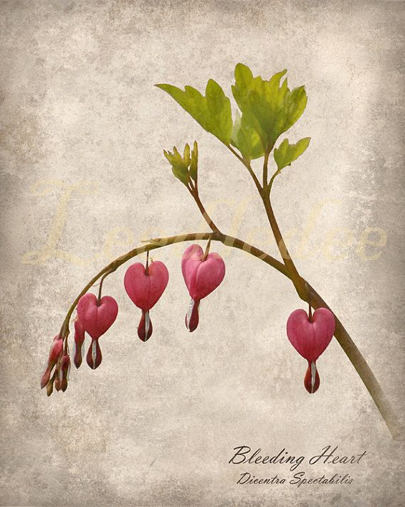 Idea By Chickie Cago On Botanicals Heart Flower Tattoo Bleeding