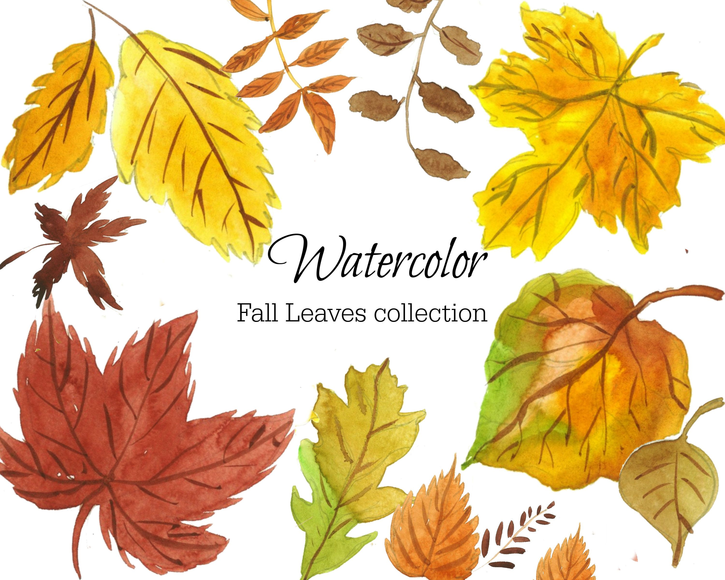 Watercolor Fall Leaves Handpainted Leaves Autumn Leaves Png