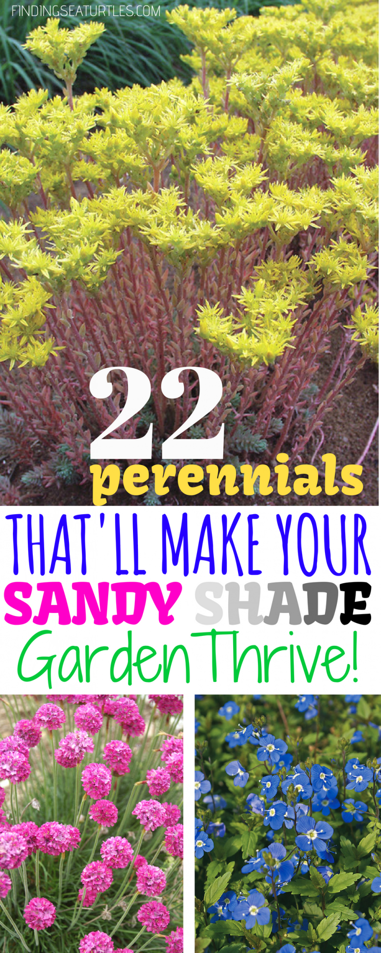 22 Sandy Soil Perennials for Shade - Finding Sea Turtles