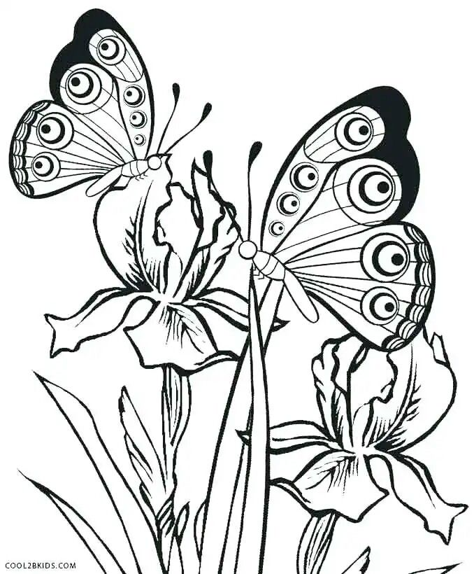 Pin By Hanlie Swanepoel On Kuns Verf Butterfly Coloring Page