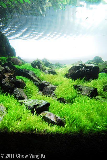 2011 AGA Aquascaping Contest - Entry #115