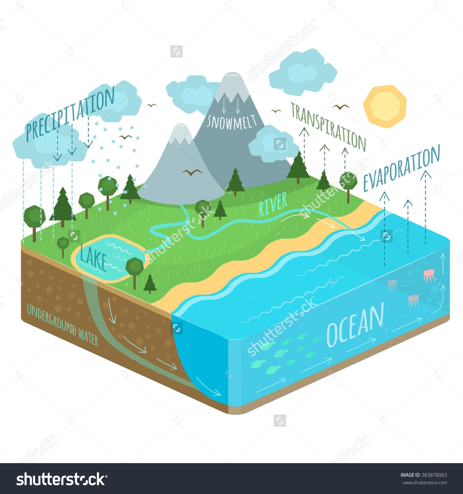 Water Cycle Diagram Rain Tree Soil Precipitation Transpiration River Earth Cloud