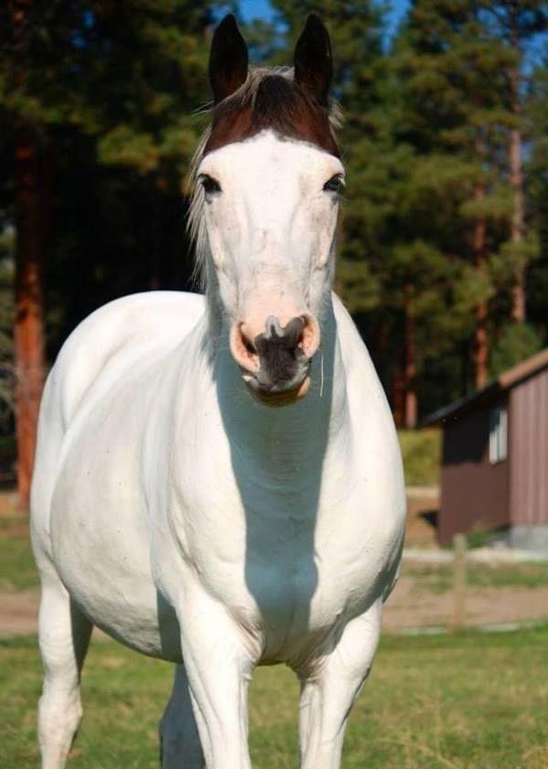 053fb5a15c7 Medicine Hat Horse- cool markings!