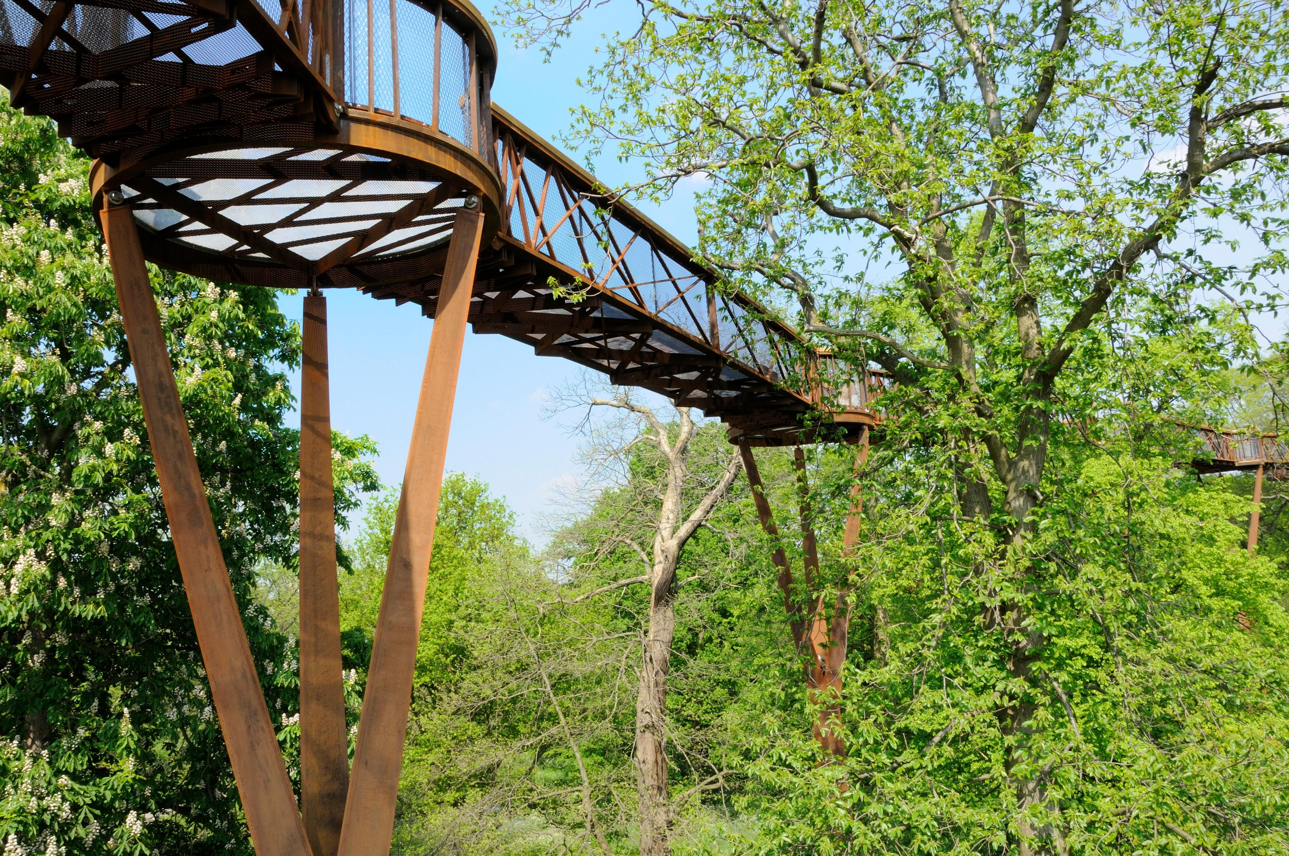 The Treetop Walkway at Kew Gardens, London. As well as walking high up alongside treas you can see the ground below through the walkway. The experience is surreal!