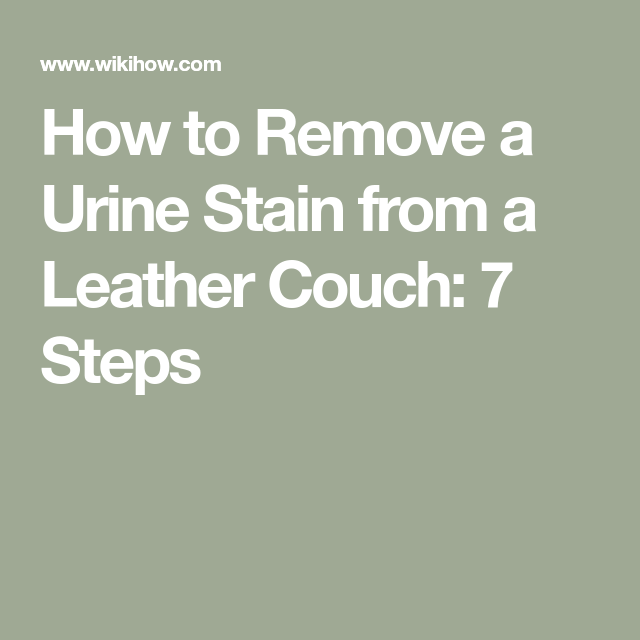 Swell Remove A Urine Stain From A Leather Couch Cleaning Urine Pabps2019 Chair Design Images Pabps2019Com