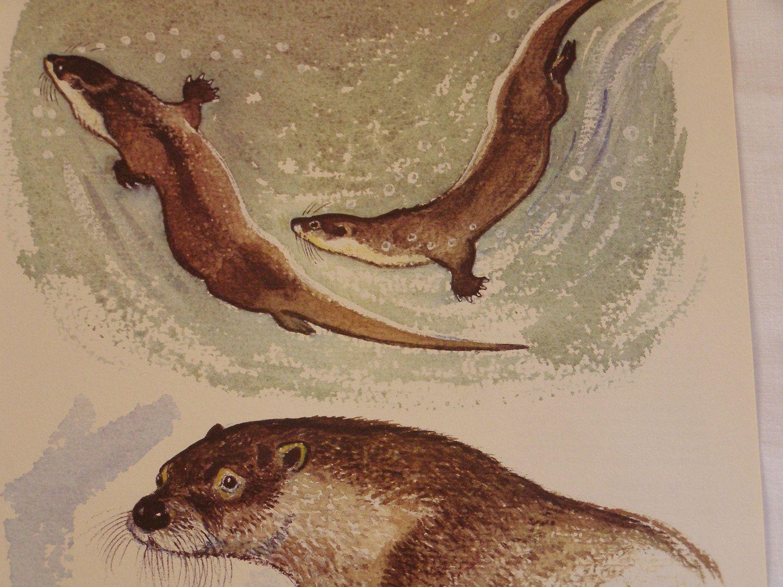 river otter swimming - Google Search   Mustelids   Pinterest ...