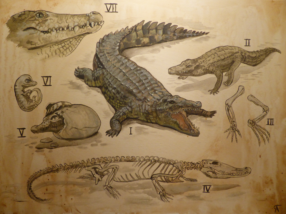 Dile By Griffsnuff Crocodile Alligator Lizard Diagram