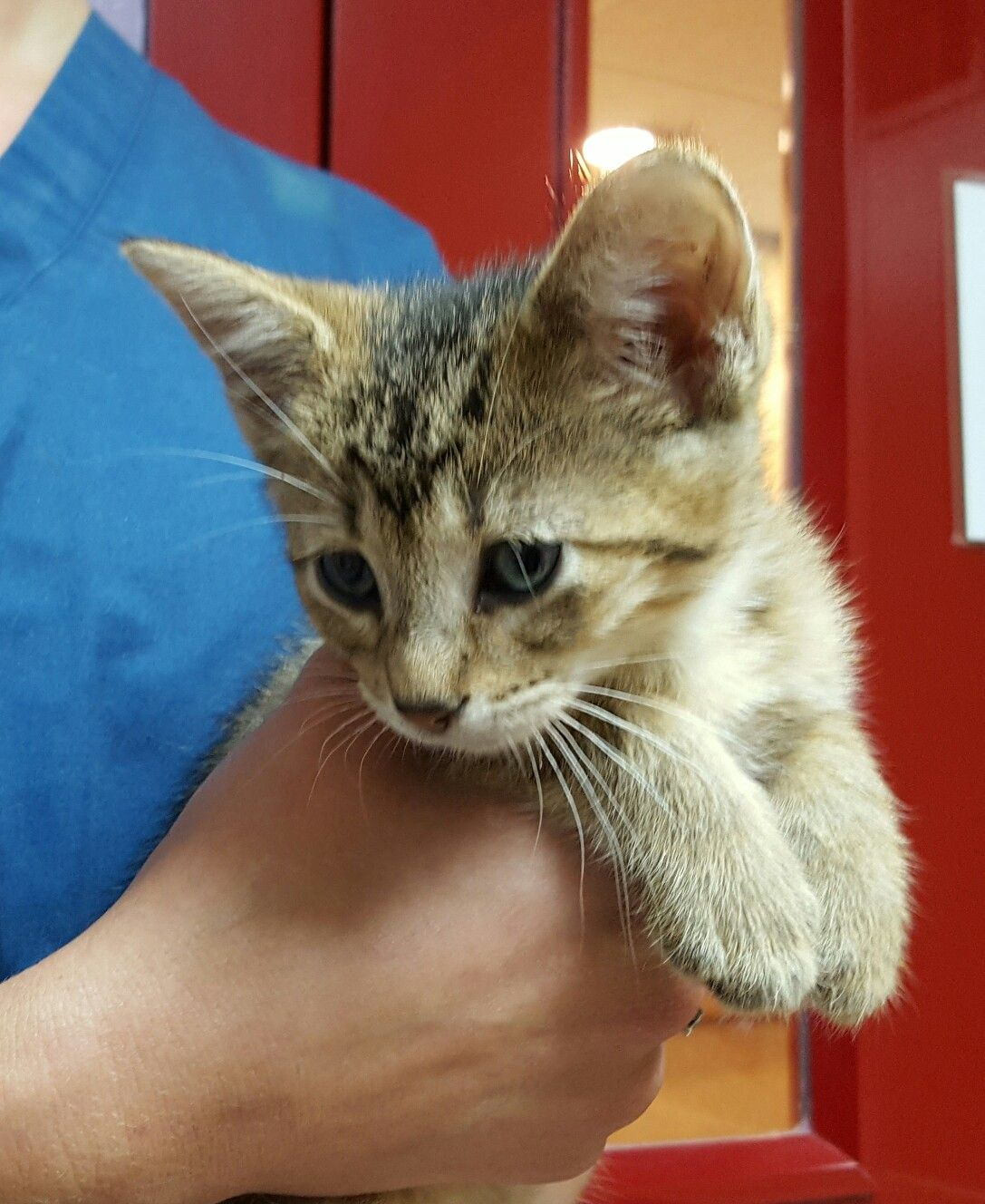 18+ Toms river animal hospital ideas in 2021