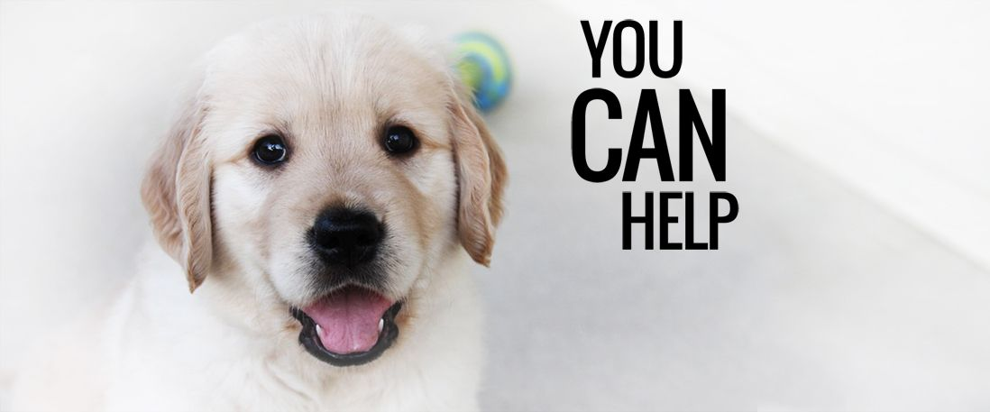 I CAN HELP PAWS DOG RAISE A FOSTER PUPPY Foster