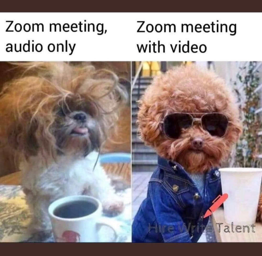 zoom meeting audio only meme, dog Google Search in 2020