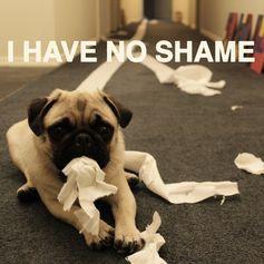 Pugs with no shame!