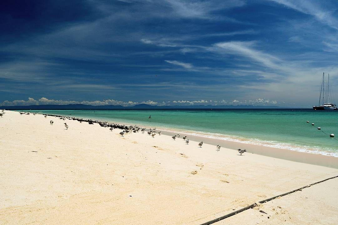 Michaelmas Cay | the beach and the birds.  #michaelmascay #qld #cairns #greatbarrierreef #beach #australia #nikon #nikond5300 #d5300 #ig_australia #seeaustralia @australia #australiagram #australia_oz #amazing_australia #ausfeels #australia_shotz #exploringaustralia #exploreaustralia #welivetoexplore #nakedplanet #ourplanetdaily #theglobewanderer #discoverearth #earthfocus #naturemastershotz #global_hotshotz #travellushes #exploringtheglobe #wildernessculture by jakeahealy…
