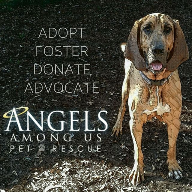 Instagram Photo By Angelsrescue Via Ink361 Com Paws Rescue