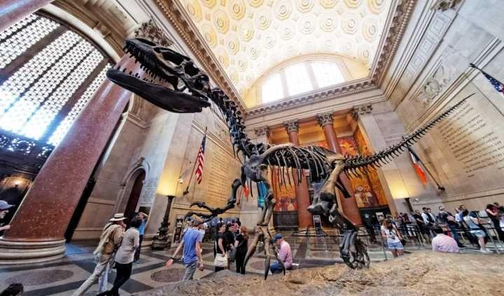 Museu Americano De História Natural Oferece Cursos Gratuitos História Natural Viagem Nova York Museu De História Natural