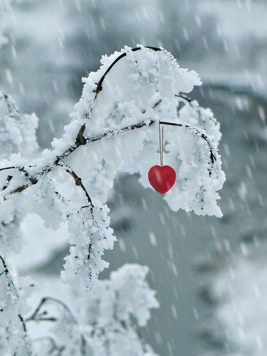 """the shape of my heart """"winter love"""" by Gregor Halbwedl ...   Hearts In Nature Winter"""