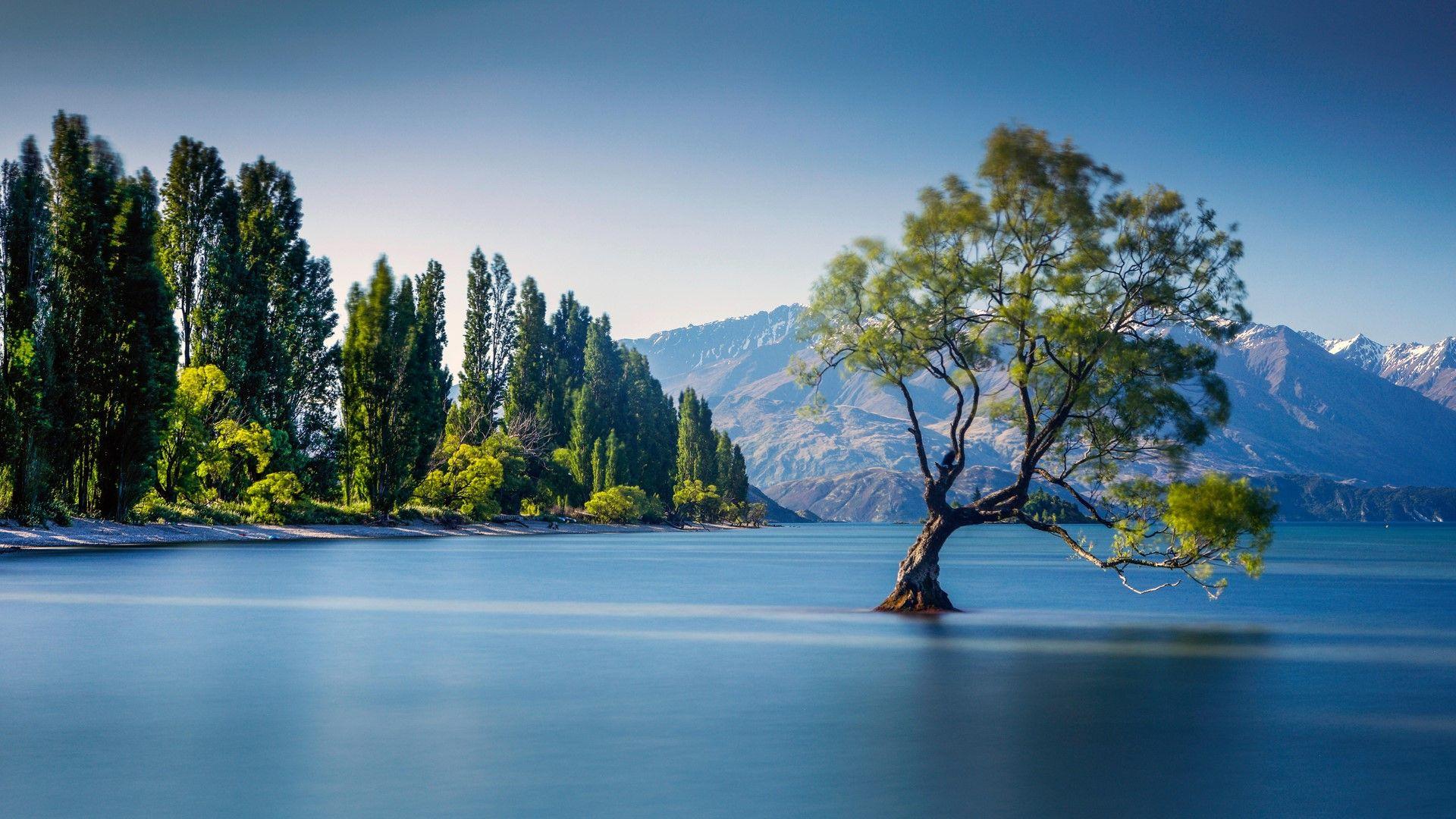 The famous Wanaka Tree at Lake Wanaka, Otago, New Zealand. [Desktop  wallpaper 1920x1080] | Lake wanaka, Wanaka new zealand, New zealand lakes