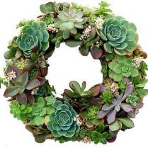 45+ Know What Gurus Think About Assorted Succulents
