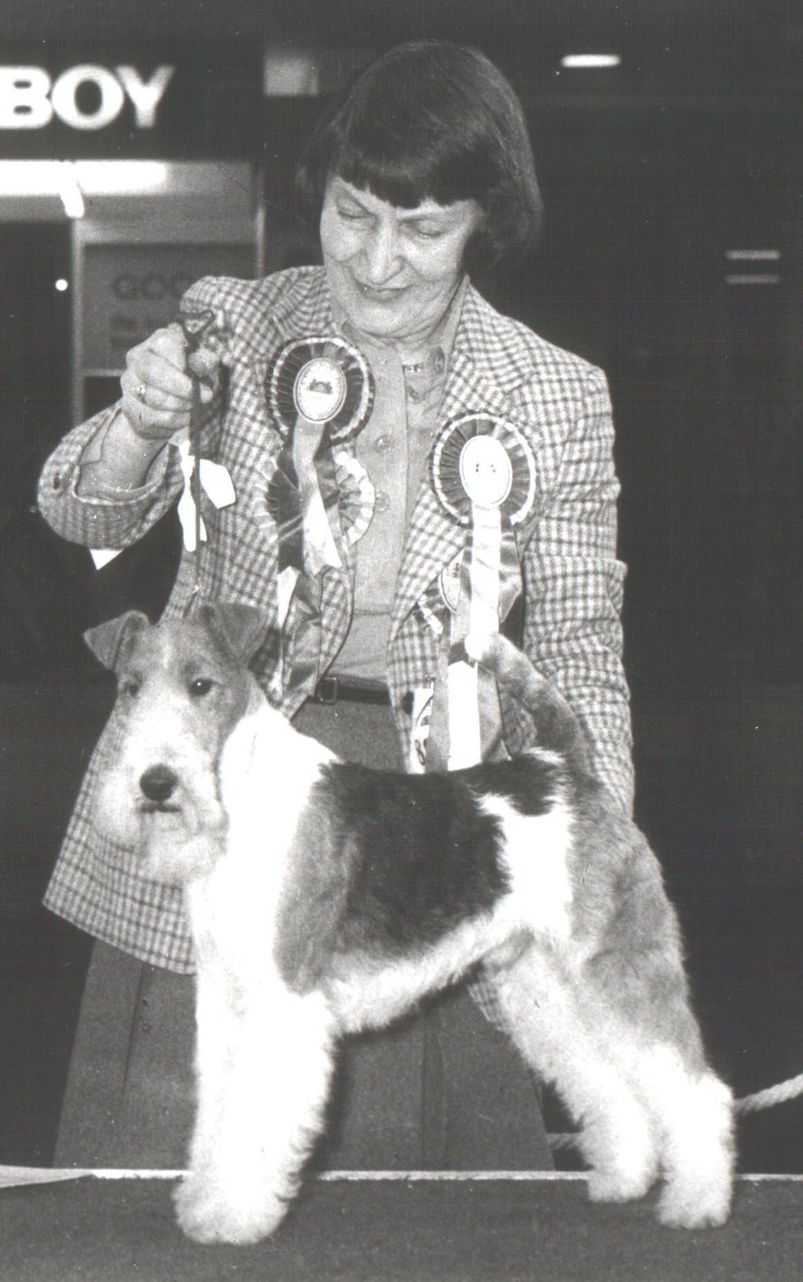 1978 Harrowhill Huntsman Wire Fox Terrier Fox Terrier Wire