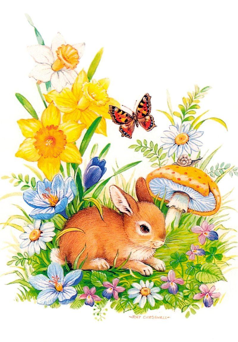 Картинки открытки зайцы