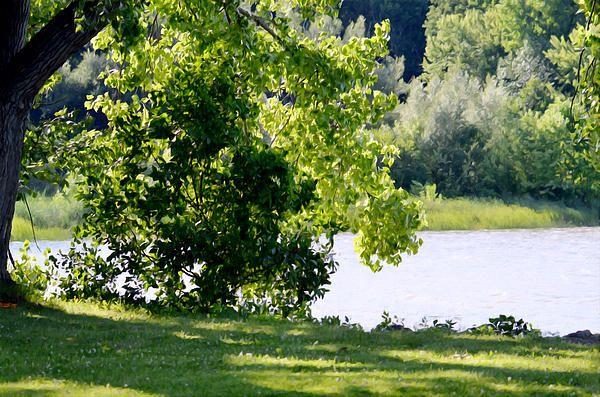 Tree At Riverside Park