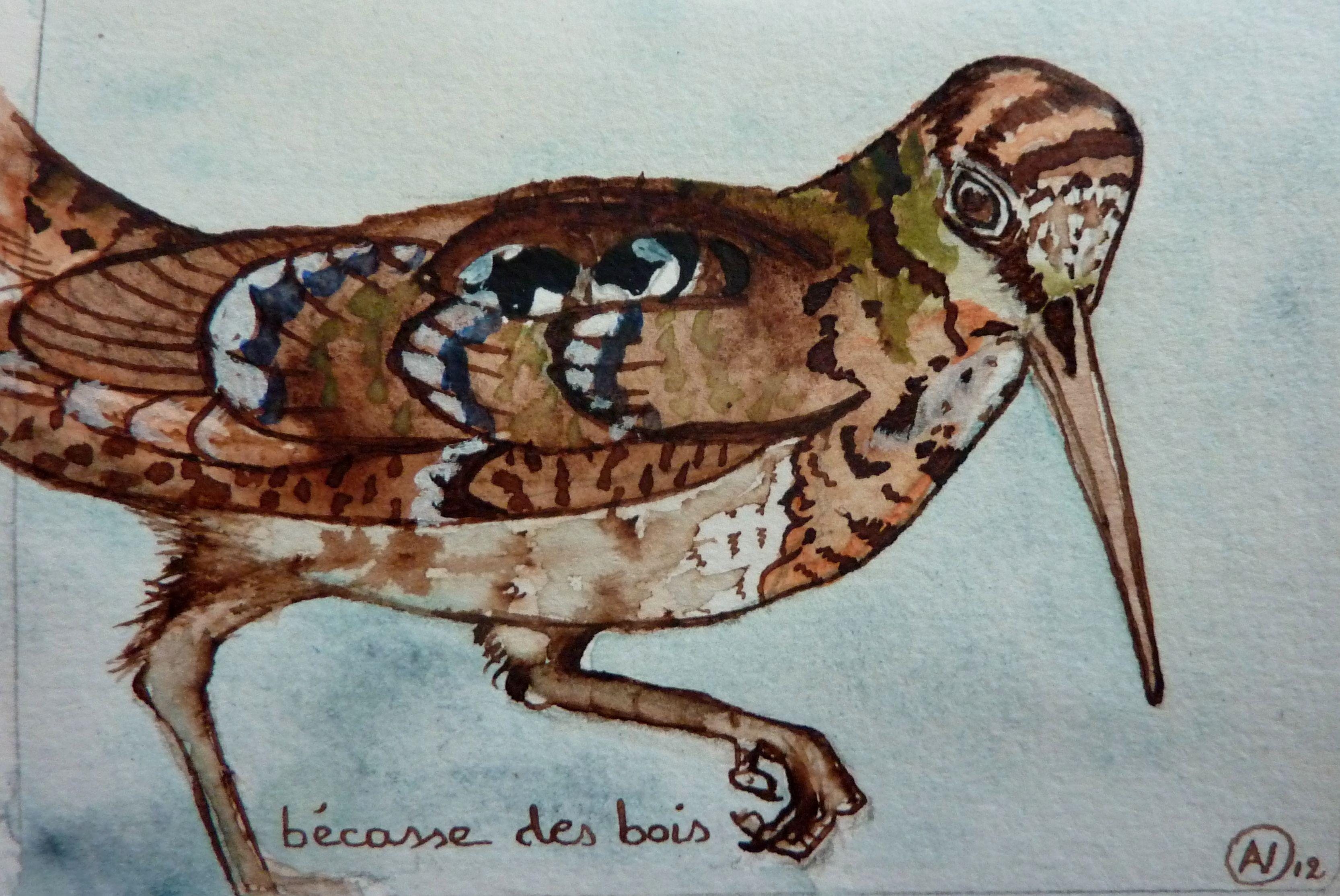 woodcock/bécasse (aquarelle AV)
