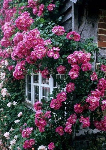 Una muralla de flores <3