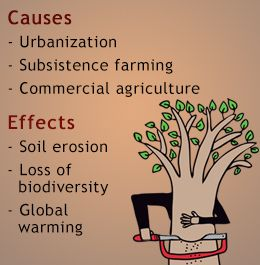 What are the negative effects of deforestation?