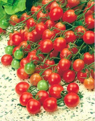 Pomidor Malinowy Kapturek - do 600 sztuk z krzaka! - Sklep Świat Kwiatów | Dostawa gratis!