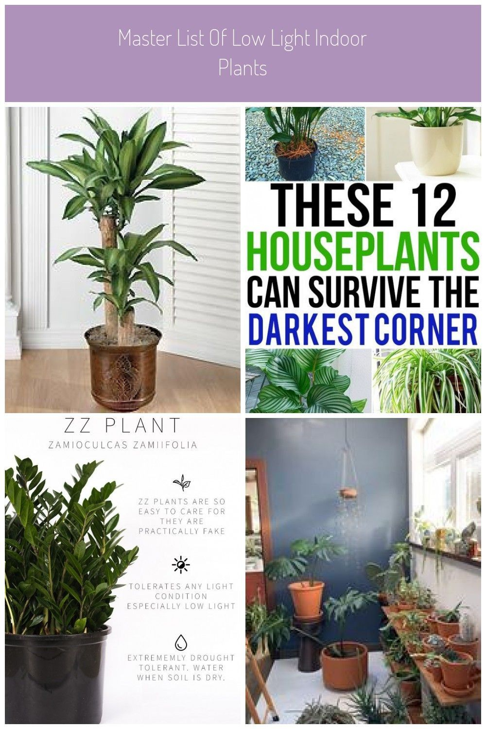 Tropical House Plants Identifying Common Low Light Buy Indoorbuy Common House Bu Buy Common In 2020 Tropical House Plants House Plants Indoor Common House Plants