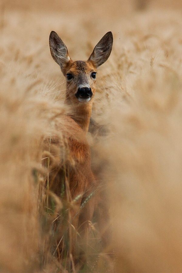 Deer by Jakub Mrocek