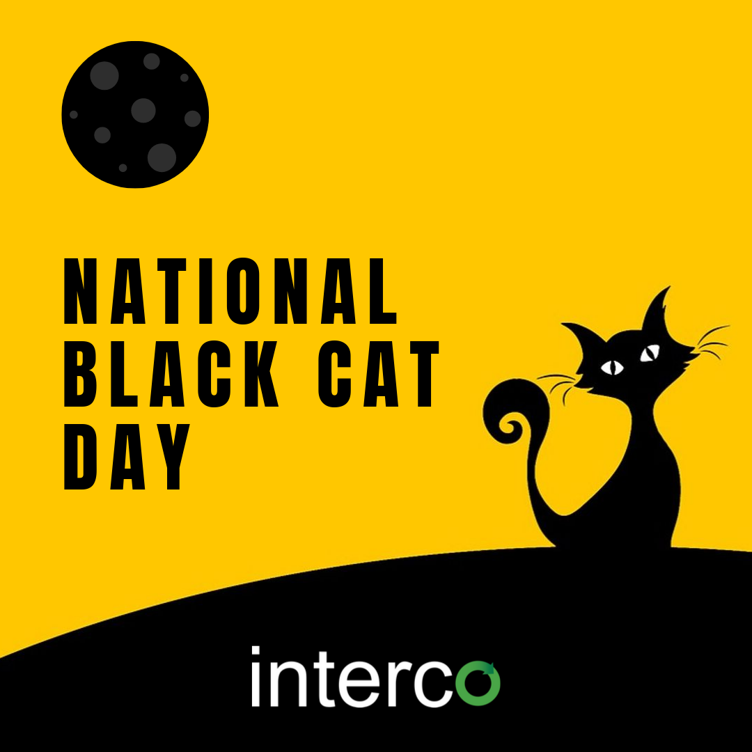 Today We Celebrate National Black Cat Day Did You Know That Black Cats Spend An Average Of 13 Longer Time I National Black Cat Day Black Cat Day Black Cat