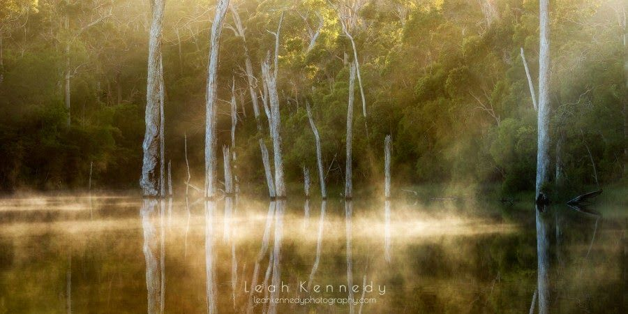 Karri Valley by Leah Kennedy #nature #landscape #photo #image